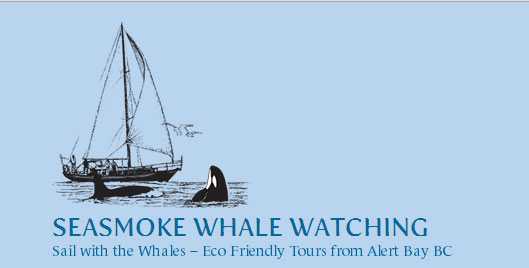 seasmoke whale watching alert bay 360 alert bay